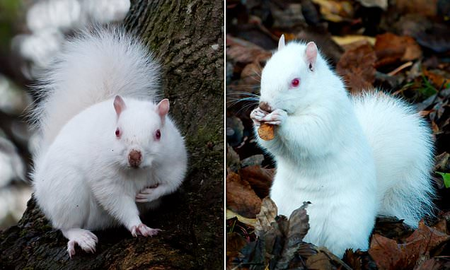Man Snaps Astonishing Pics Of One Of Country's 50 Albino Squirrels Outside His Home