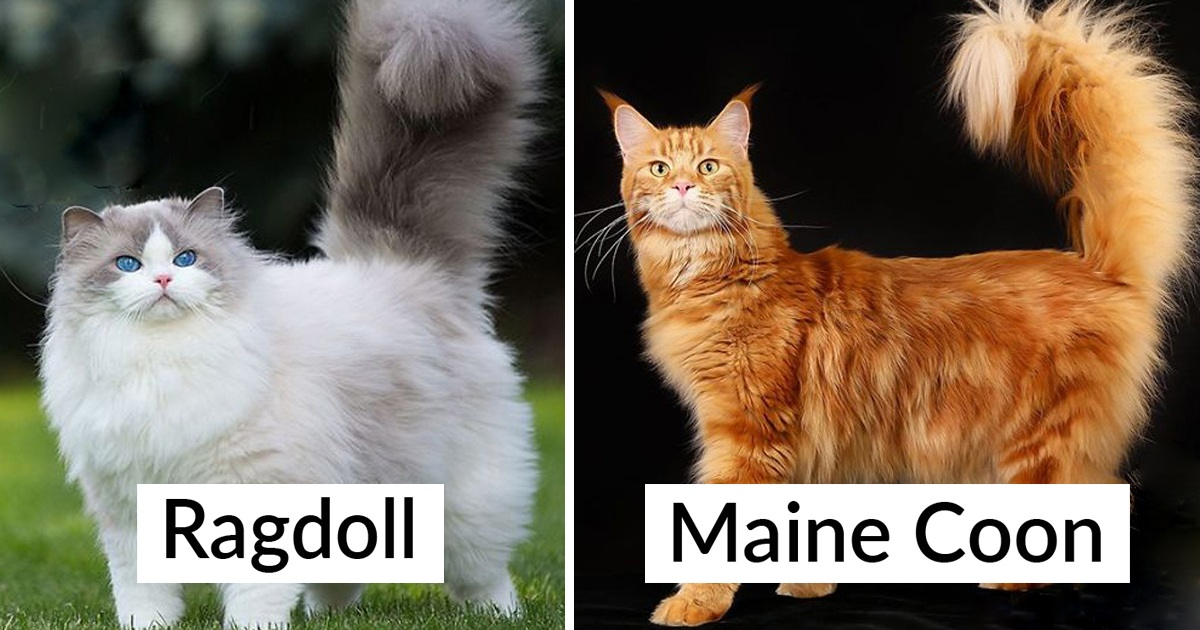 30 Most Popular Cat Breeds And How They Came To Be