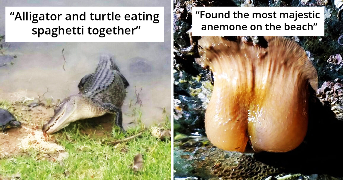 30 Hilariously Crappy Wildlife Photography That Really Deserve Their Own Awards