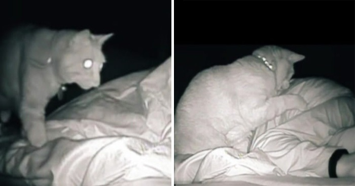 Woman Always Wakes Up Tired Finds Out Her Cat Hits Her For Hours In Her Sleep