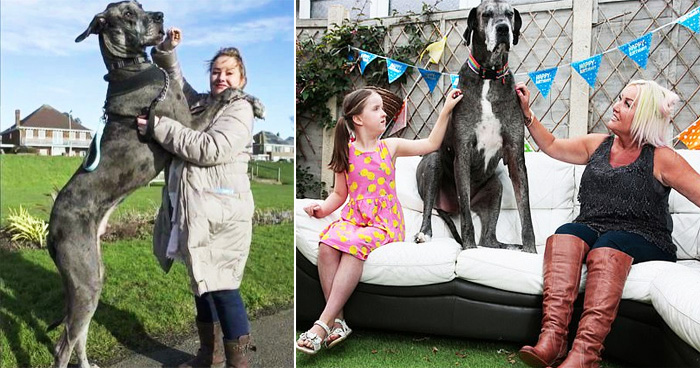 Freddy, The World's Tallest Dog Dies At Age 8