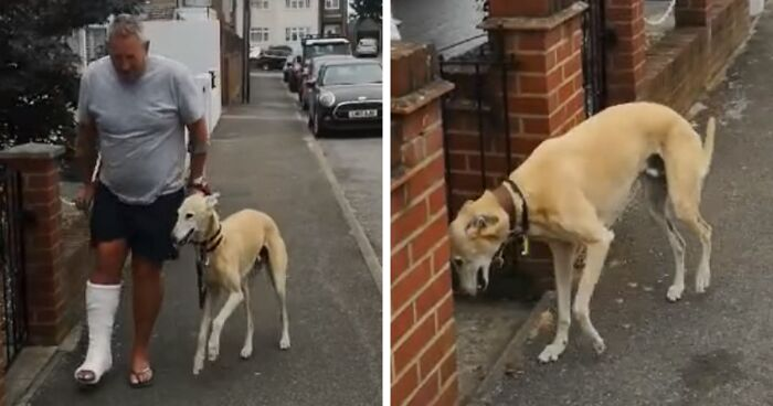 Man Spends $400 To Treat Dog's Limping Only To Find Out He Was Imitating Him Out Of Sympathy
