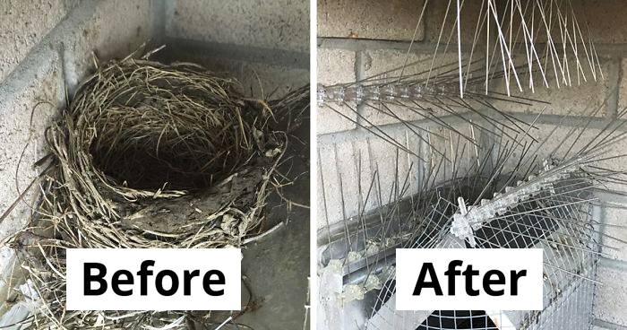 Man Shares Hilarious Pics Of His 4-Year Battle With Birds