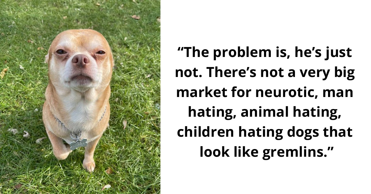 Woman's Honest Adoption Ad For 'Neurotic' Chihuahua Goes Viral