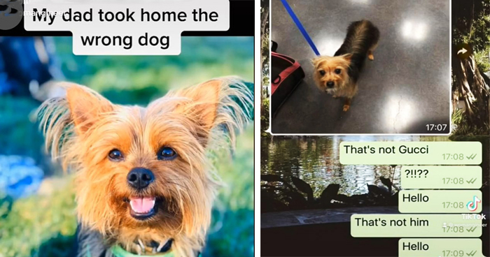 Dog Owner Left In Shock After Her Dad Picks Up The Wrong Dog From Groomers