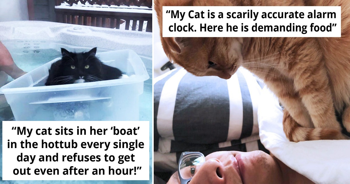30 Super Spoiled Cats Who Really Deserve The World's Love