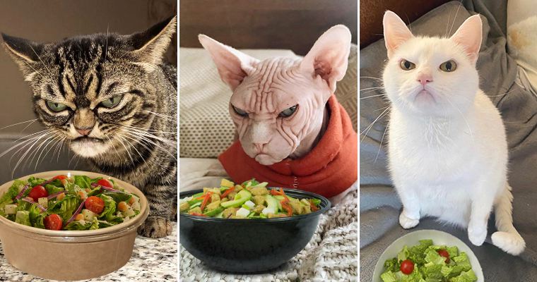 People Are Offering Salads To Their Cats, And The Reactions Are Hilarious