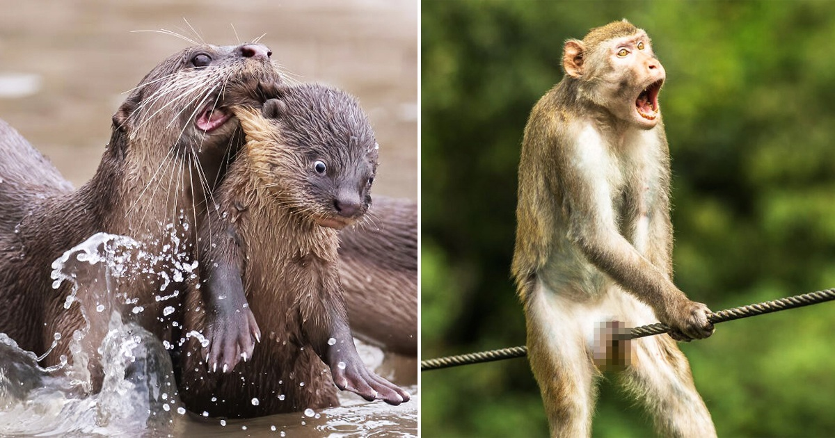 25 Of The Most Hilarious Pics From 2021 Comedy Wildlife Photography Awards That Will Crack You Up